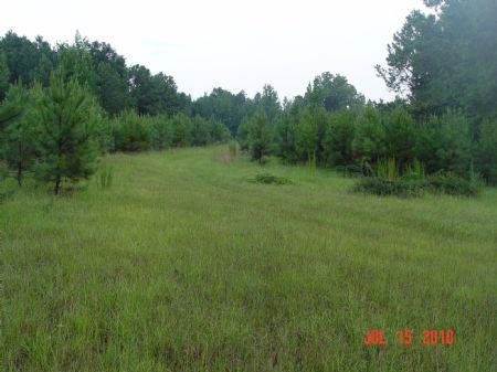 125 Acres : Selma : Dallas County : Alabama