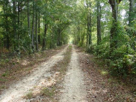 400 Acres Of Hunting & Timberland : Sellers : Montgomery County : Alabama