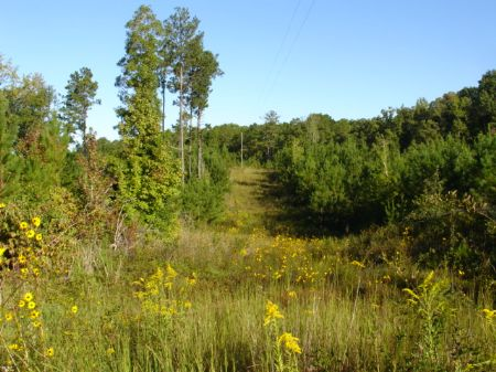 108 Acres Of Prime Hunting Land : Rockford : Coosa County : Alabama
