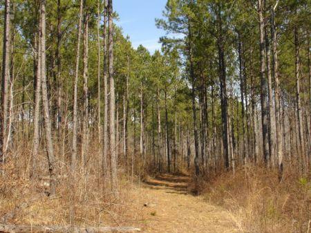 Highly Managed 202 Ac. Timberland : Equality : Coosa County : Alabama