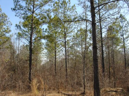 174 Acres Close To Montgomery : Wetumpka : Elmore County : Alabama