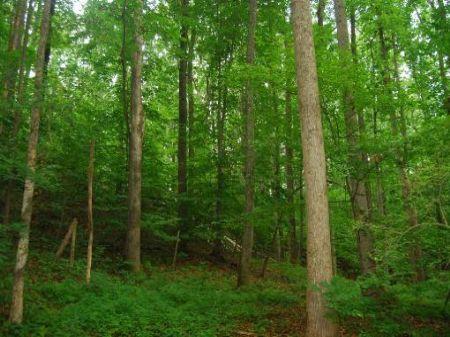 14.7 Acres For Development : Gaffney : Cherokee County : South Carolina