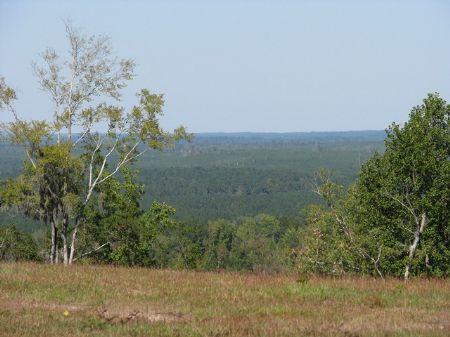 Old Scotland Road 515 : Monroeville : Monroe County : Alabama