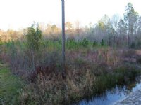 22 Acres-lot 11 Tall Pines : Starke : Bradford County : Florida