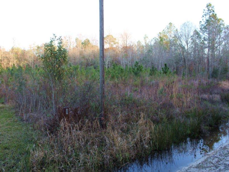 22 Acres-lot 11 Tall Pines : Starke : Bradford County : Florida