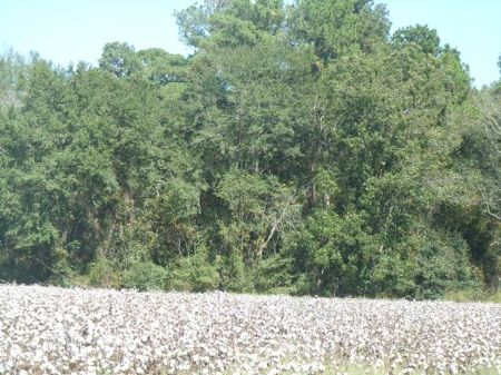 55+/- Acres Old Register Way : Statesboro : Bulloch County : Georgia