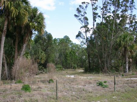 Ten Acres of Privacy : Fellsmere : Indian River County : Florida