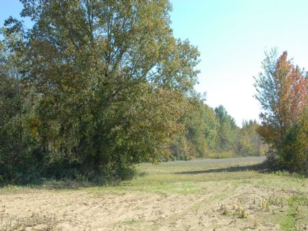 200 Acre Deer/duck Lease : Hicksville : Phillips County : Arkansas