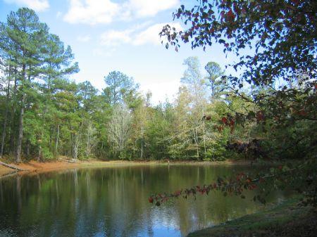 Vesta Tract : Lexington : Oglethorpe County : Georgia