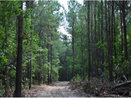 50 Ac Hunting : Huger : Berkeley County : South Carolina