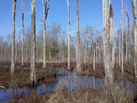 Jackson 219 : Jackson : Jackson Parish : Louisiana