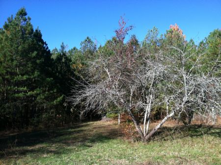 6.96+/- Wooded Acres - Estate Owned : White : Bartow County : Georgia