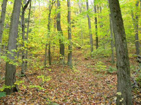 72+ Wooded Acres Great Hunting : Catlin : Chemung County : New York