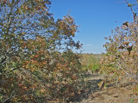 Stallion Hills Tract 6 : Antlers : Pushmataha County : Oklahoma
