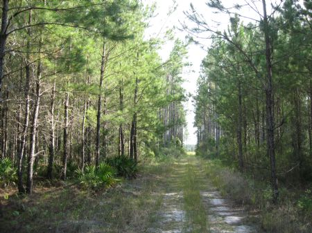 Great Investment, Close To Town. : Folkston : Charlton County : Georgia