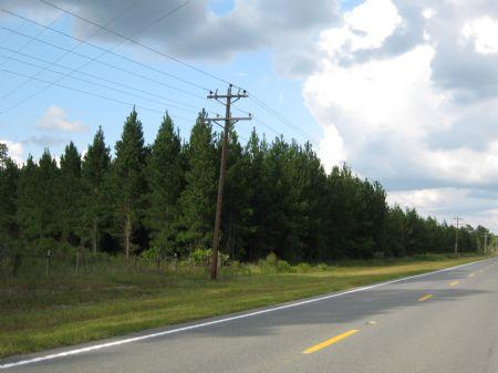 Great Timber, Close To Town : Folkston : Charlton County : Georgia