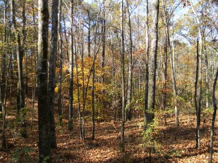 32 Acres Wetumpka With River View : Wetumpka : Elmore County : Alabama