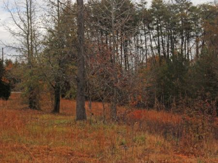 10-acre Home Site Or Hunting Tract : Campobello : Spartanburg County : South Carolina