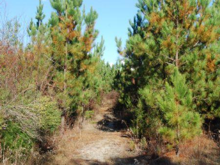 40 Acres Of Hunting Land : Carlisle : Union County : South Carolina