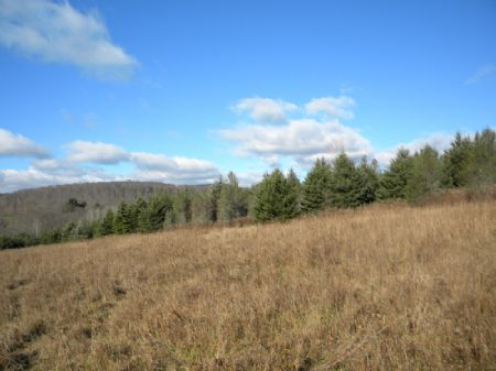 105 Acres Includes Mineral Rights : Newark Valley : Tioga County : New York