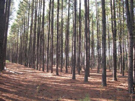 2,336 Acres Investment Grade Timber : Lumber City : Telfair County : Georgia
