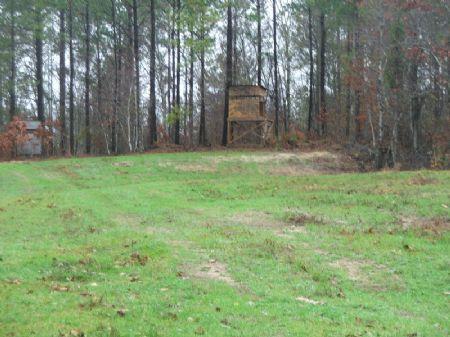 525 Acres Of Good Recreational Land : Vernon : Lamar County : Alabama