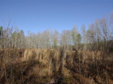 72 Acres On Broken Arrow Creek : Ragland : Saint Clair County : Alabama