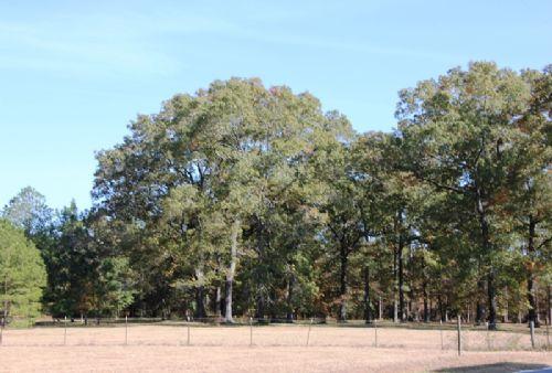 Glenn Family Farm : Quincy : Gadsden County : Florida