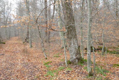 20+ Acres Bordering State Forest : German : Chenango County : New York