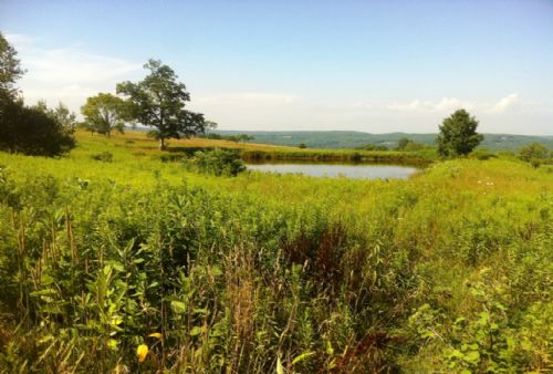 62 Acres Bordering State Forest : Smithville : Chenango County : New York