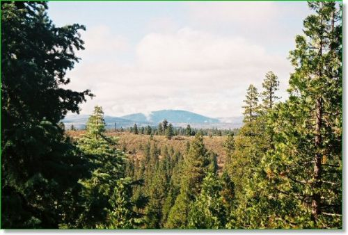 Oregon Land W/ Old Growth Timber : Bonanza : Klamath County : Oregon