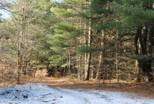 35 Acres Woodland Creek Hunting Atv : Vienna : Oneida County : New York