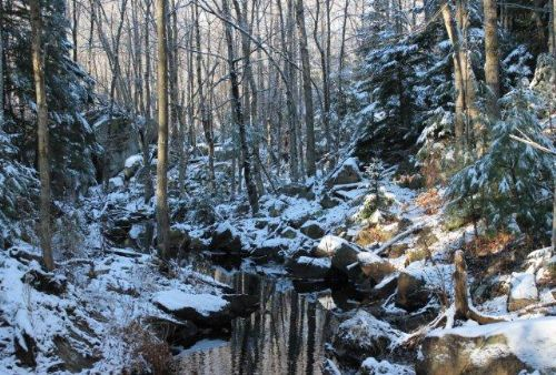 5+ Acres Woods Bordering Forest : Diana : Lewis County : New York