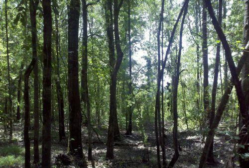 22049sa005 Jax 2 : Jackson : Jackson Parish : Louisiana