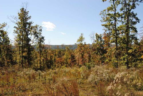 Cajun Creek 180 Acres : Mountain View : Stone County : Arkansas