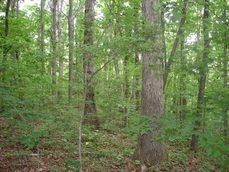 Development / Recreational Opp : Ten Mile : McMinn County : Tennessee