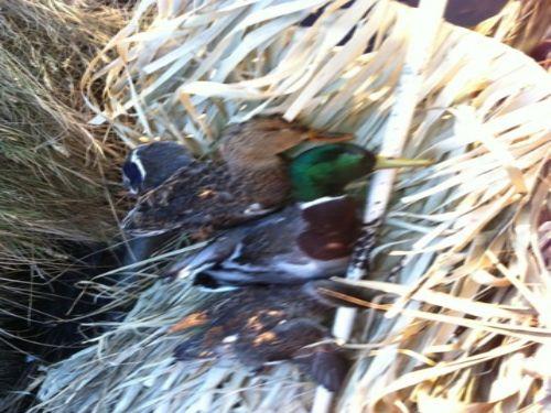 Hunting And Fishing : Hackberry : Cameron Parish : Louisiana