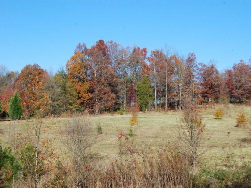 5 Acre Homesite Or Minifarm : Wellford : Spartanburg County : South Carolina