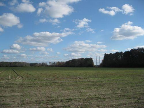 Fairfax Bank Owned Farm Land : Fairfax : Allendale County : South Carolina