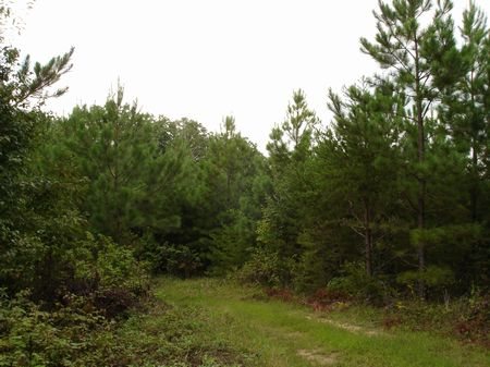 Excellent Hunting Recreation Opp : Rugby : Morgan County : Tennessee