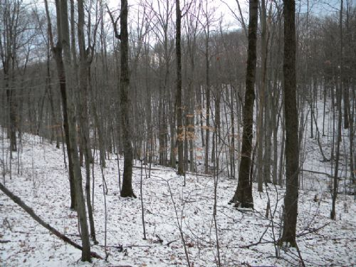 5 Acres Quality Building Lot Stream : Ithaca : Tompkins County : New York