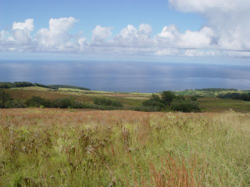 2,200  Acres, Developable Ag 11 Mil : Papaloa : Hawaii County : Hawaii