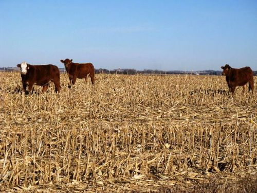 50+/- Acres Sd Farmland For Sale : Brookings : Brookings County : South Dakota