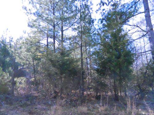 84.3 Acre Hunting Tract : Carlton : Oglethorpe County : Georgia