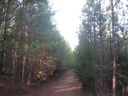 Duncan Creek 90 Tract : Whitmire : Laurens County : South Carolina