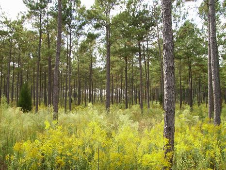 450 Acres of Prime Hunting : Butler : Taylor County : Georgia