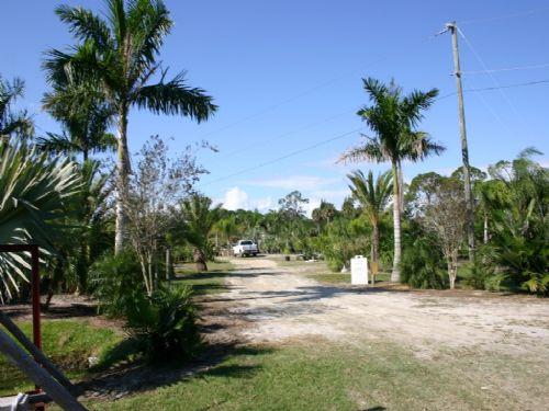 13 Acre Palm Nursery : Fellsmere : Indian River County : Florida
