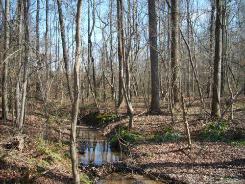 Woody Lake : Lexington : Oglethorpe County : Georgia