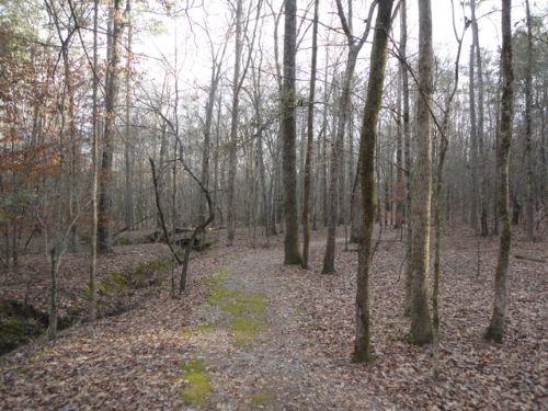 24 Acres : Greensboro : Greene County : Georgia