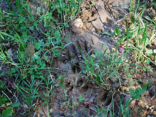 Impressive 426 Acre Hunting Tract : Pauline : Spartanburg County : South Carolina